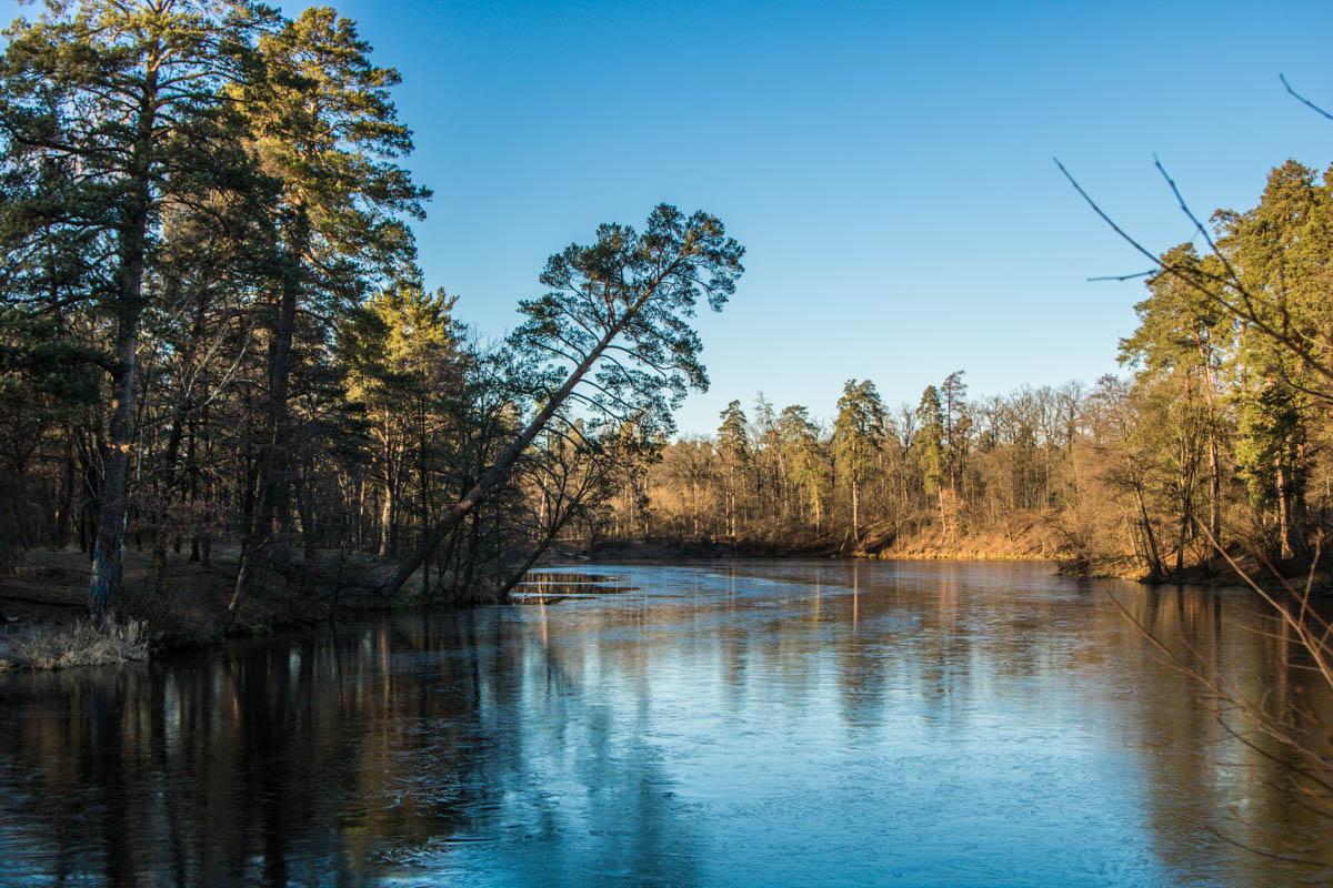Природа дарит весеннее тепло в январе