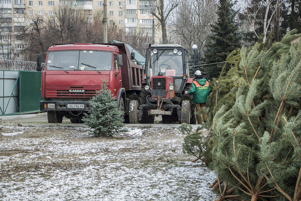 Деревья со всех пунктов приема привозят грузовиком в пункт переработки
