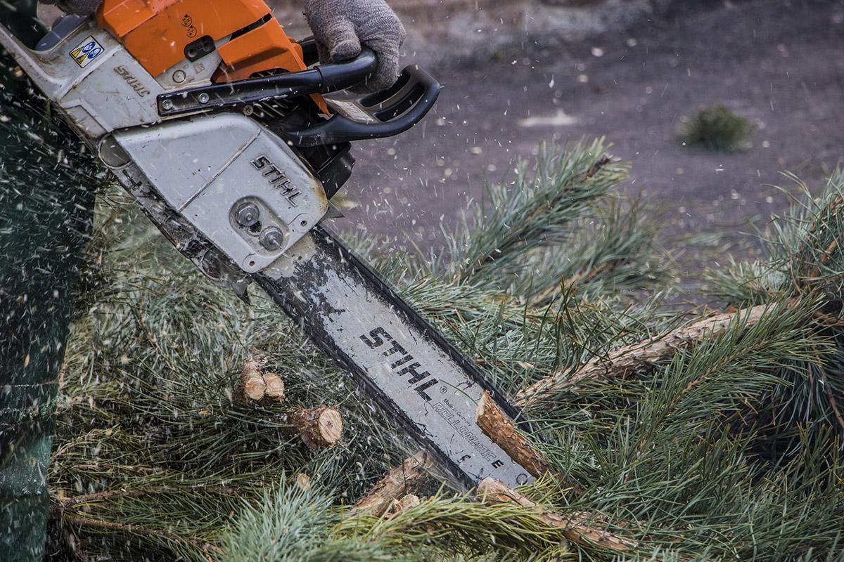 Что бы измельчить ветки, их отрезают от ствола дерева