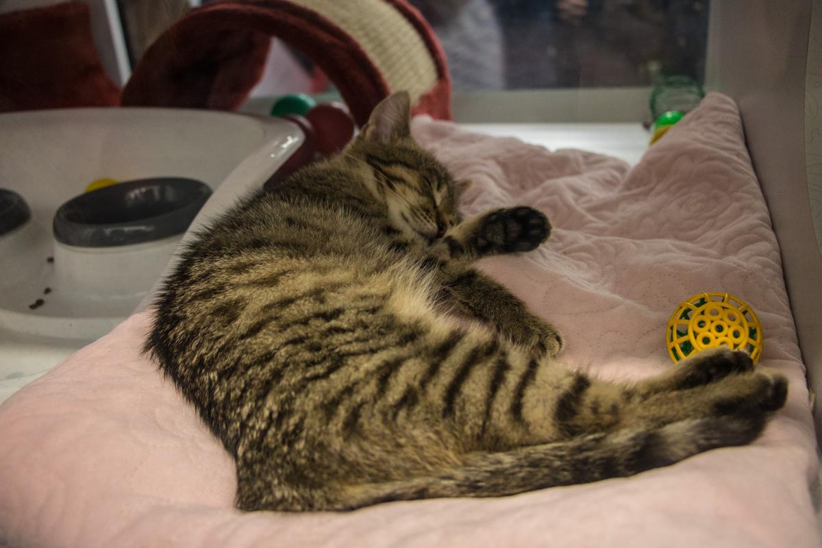 Полосатый дружок сладко спит и ждет усыновления