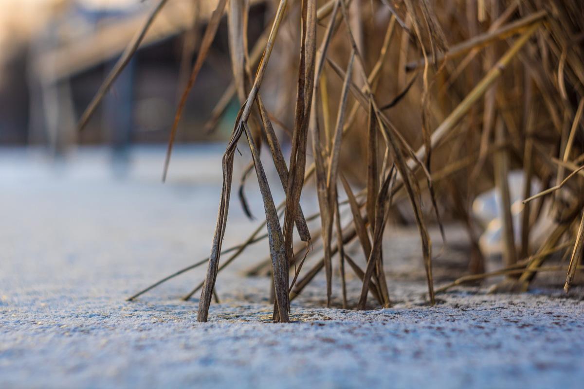Беспощадный лед