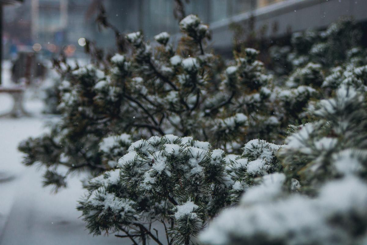 Растения красиво припорошило снегом