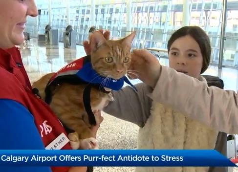 Всего для успокоения пассажиров в аэропорту работают два кота