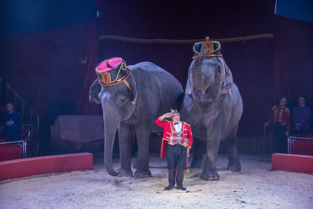 """Фрагмент из представления """"Слон и полосатый рейс"""""""