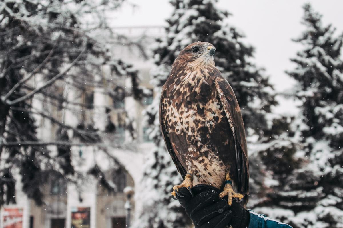 На улицах столицы в феврале можно увидеть даже хищных птиц