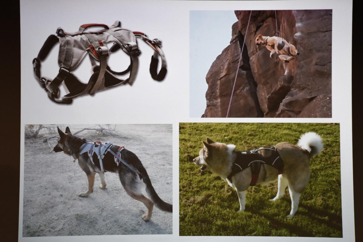 Заняться альпинизмом с собакой - это совсем не проблема