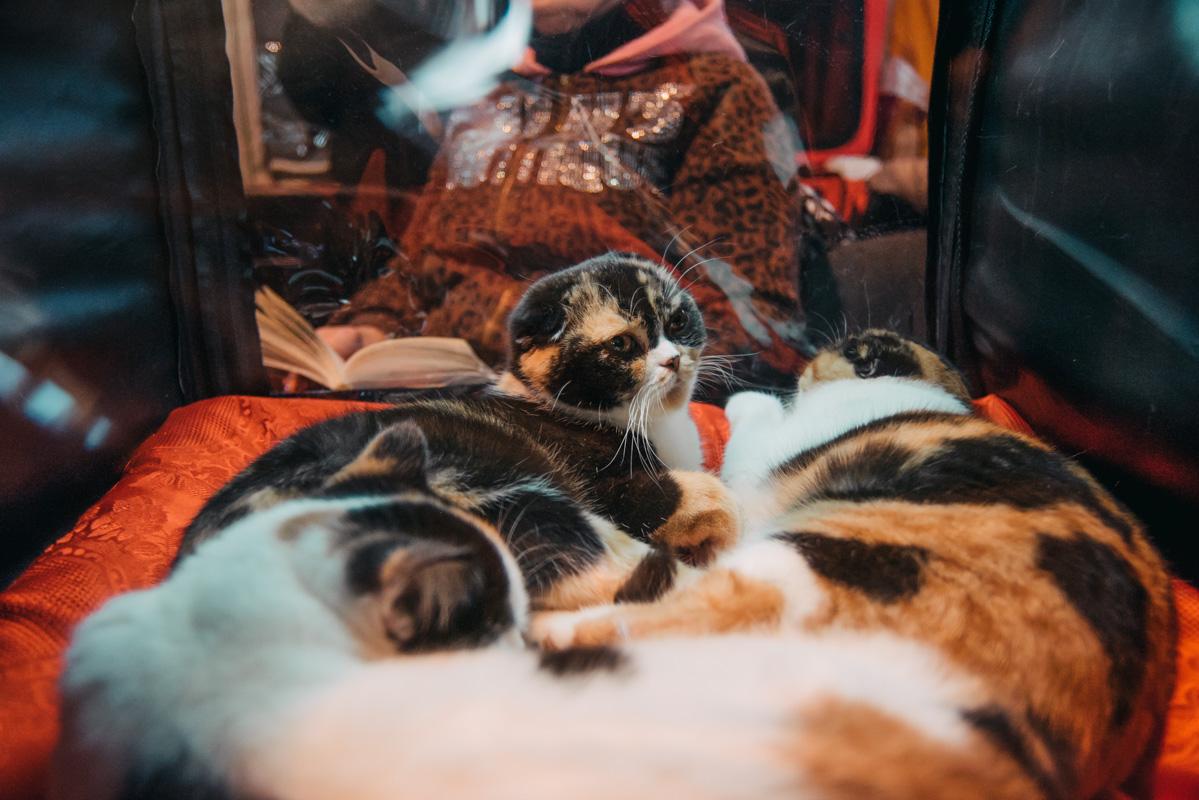 Коты вальяжно возлегали на своем ложе