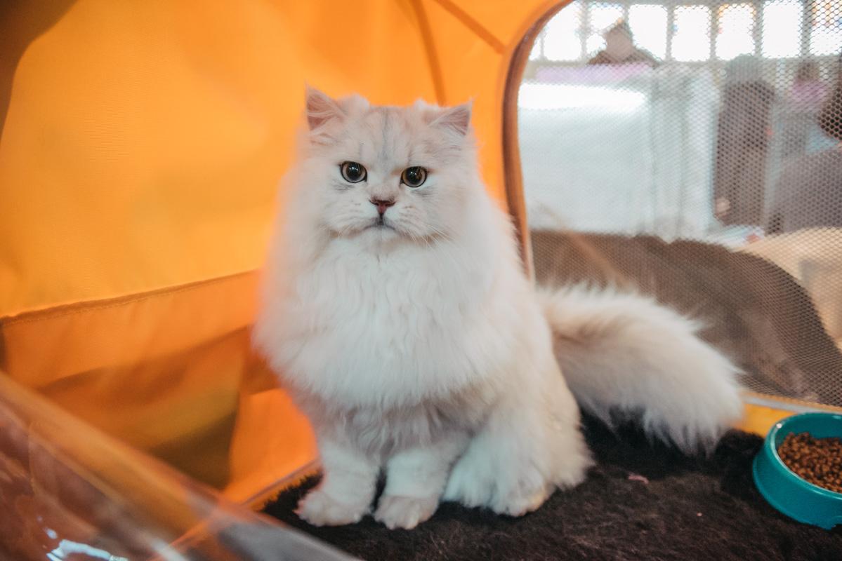 Особенно красивым был кот Том