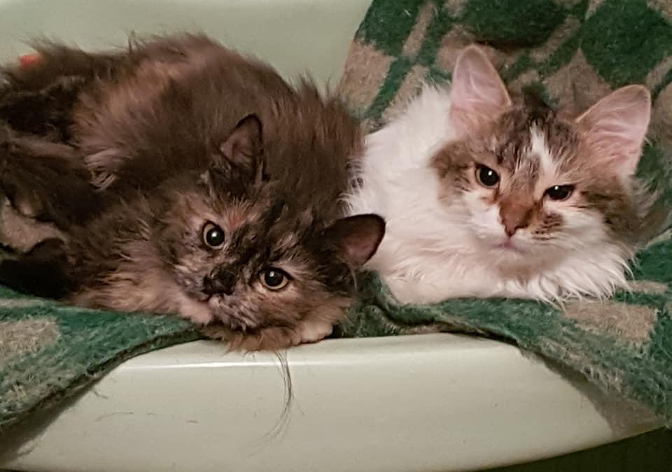 Заберите котиков в любящую семью