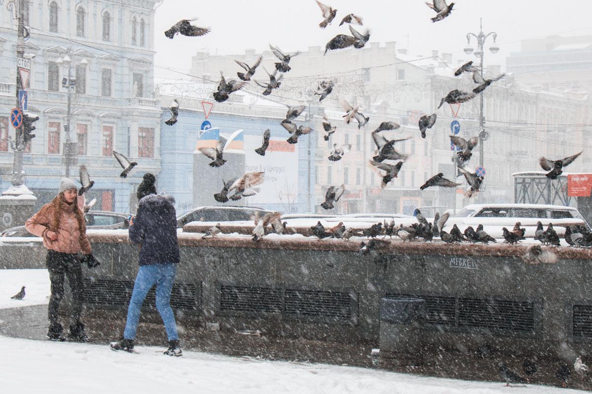 Голубям снег нипочем
