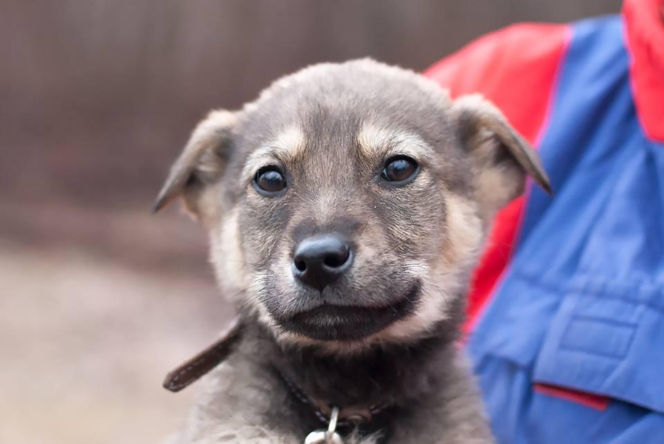 Фарго - очень умный щенок