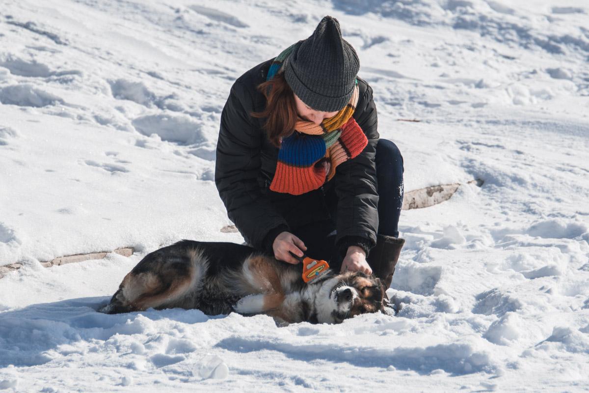 Собака-улыбака радуется снежной и морозной зиме