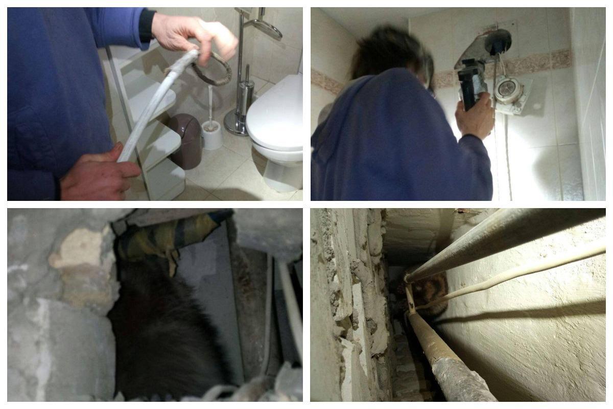 В Киеве из вентиляционного канала многоэтажки спасли енота