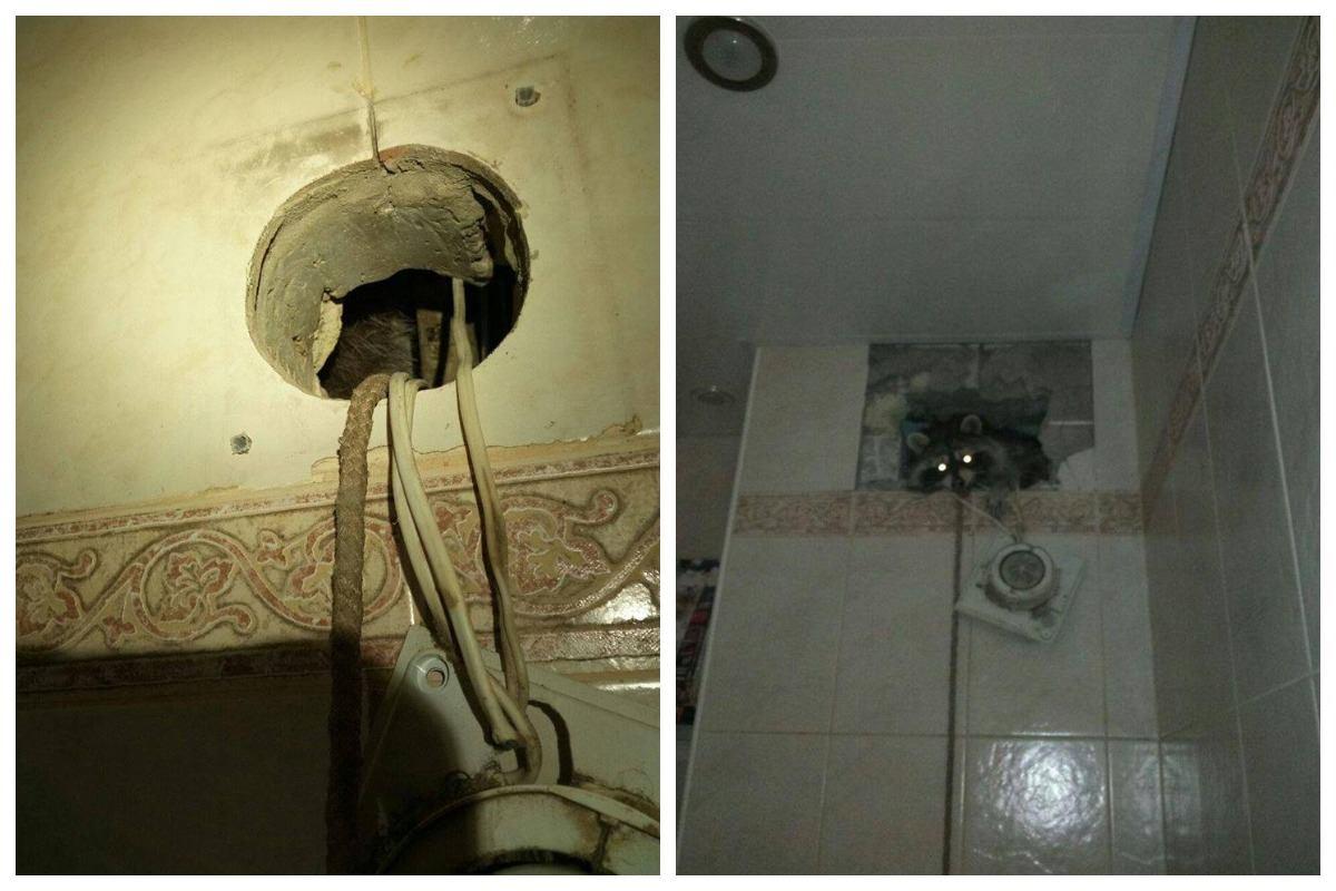 Чтобы достать животное, спасатели просверлили дыру в стене