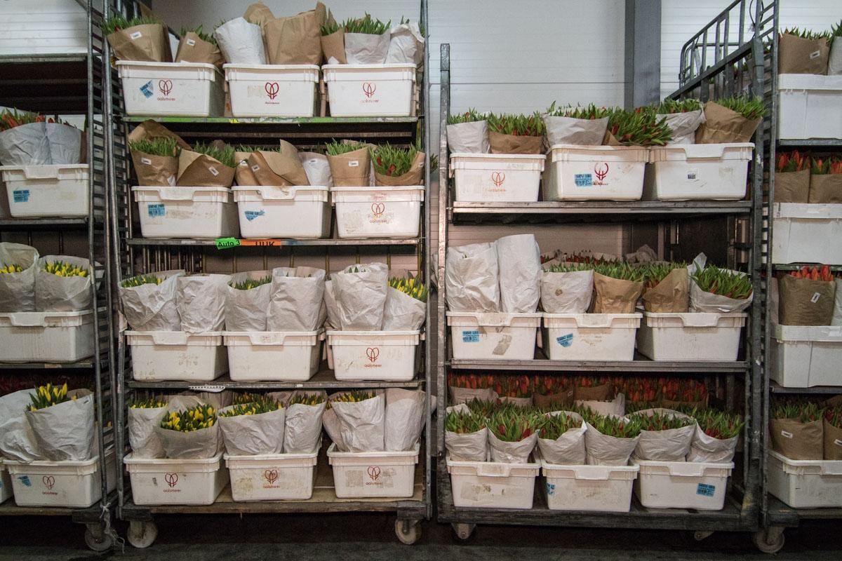 Цена на тюльпаны составляла от 17 до 30 гривен за цветок
