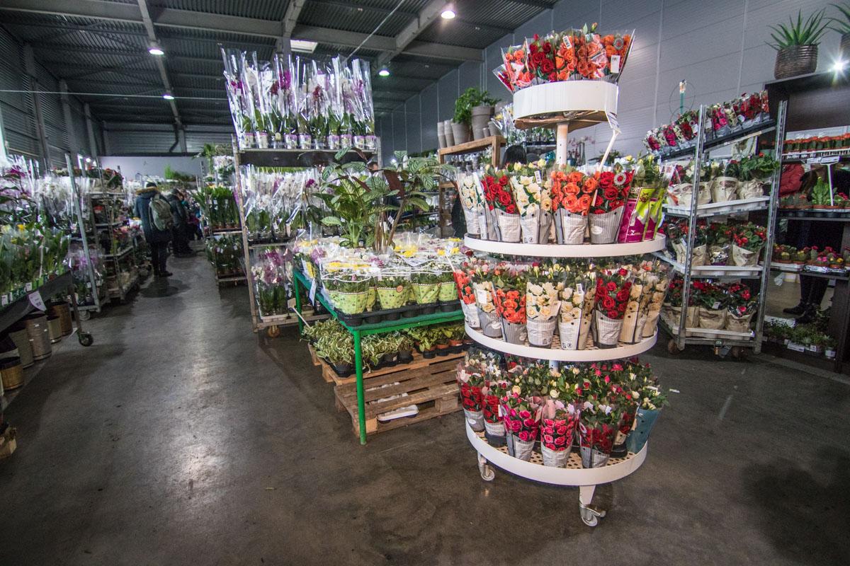 Торговцы предлагают широчайший выбор цветов на любой вкус