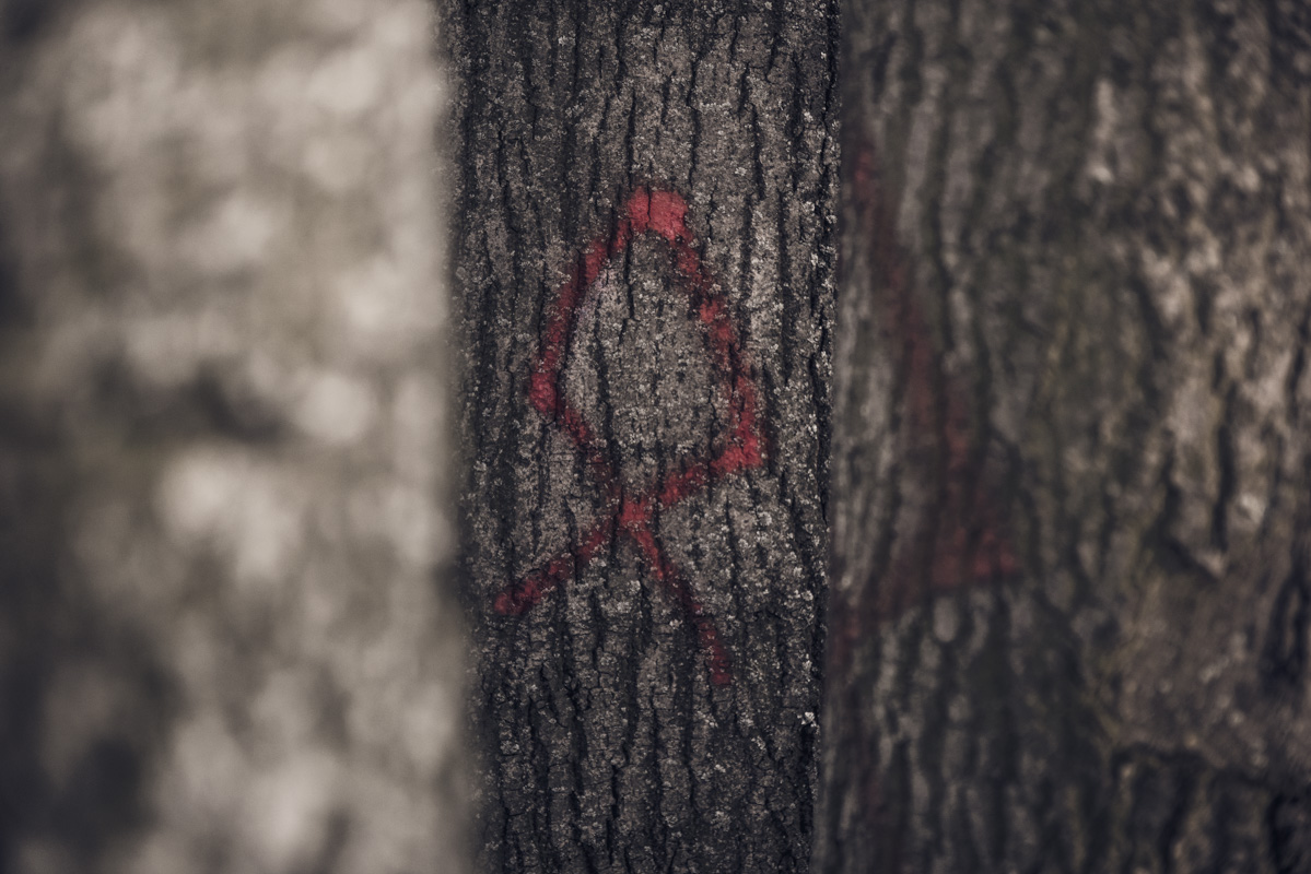 Древняя руна краснеет в лесной чаще