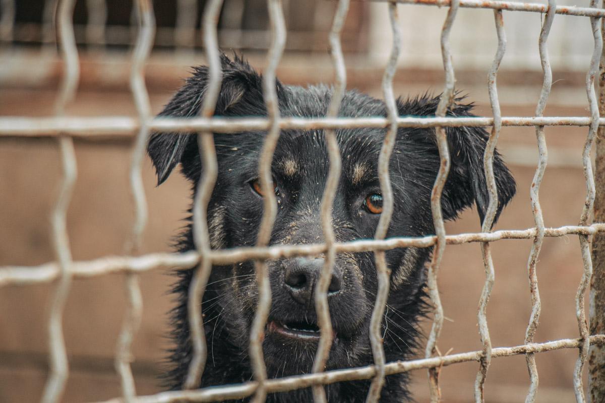 В приюте живет 113 собак