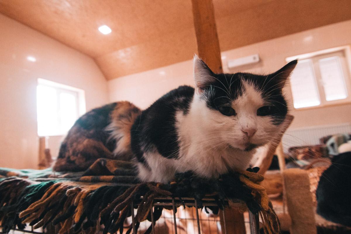 Ласковая кошечка по имени Лала ждет свою любящую хозяйку