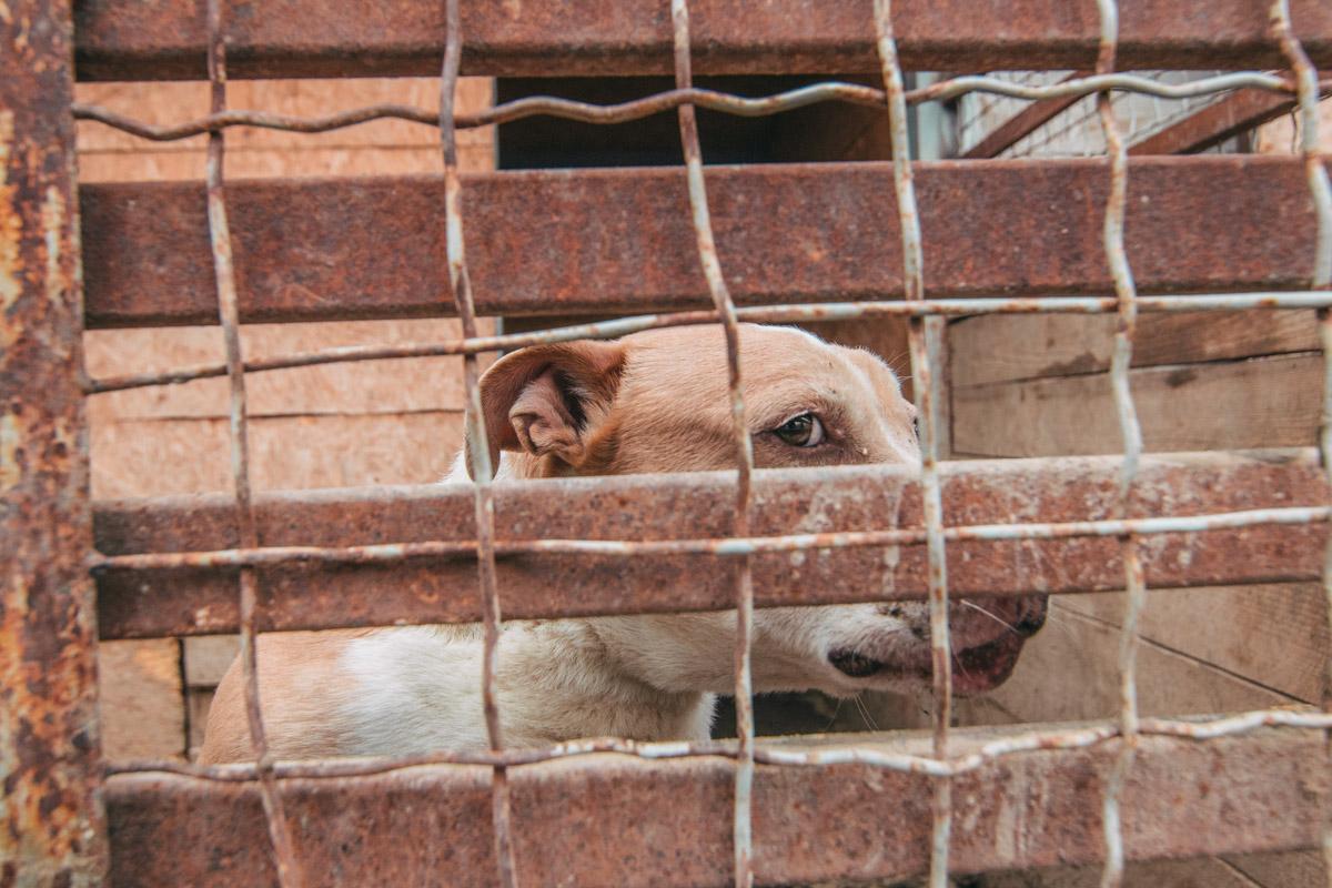 Чейси - породистая собака с тяжелой судьбой
