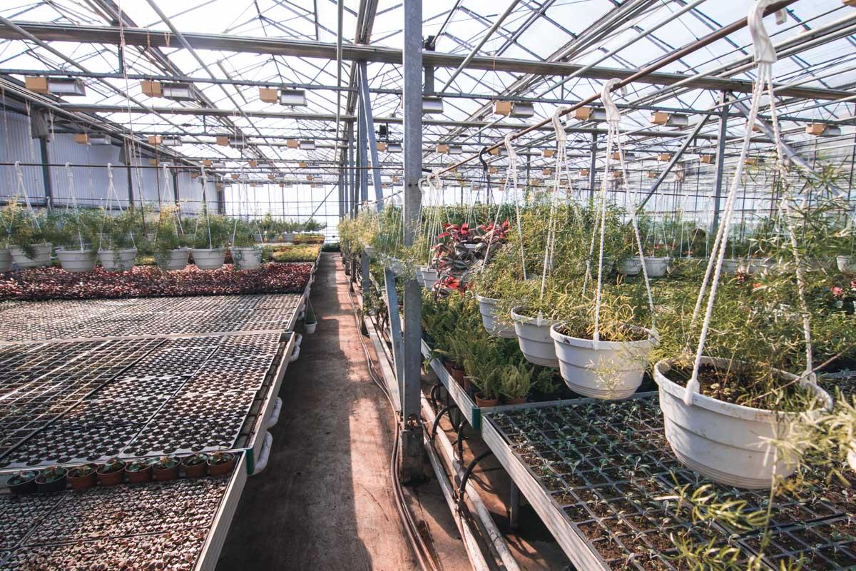 Воранжереи Печерского района растет 50 тысяч разных растений