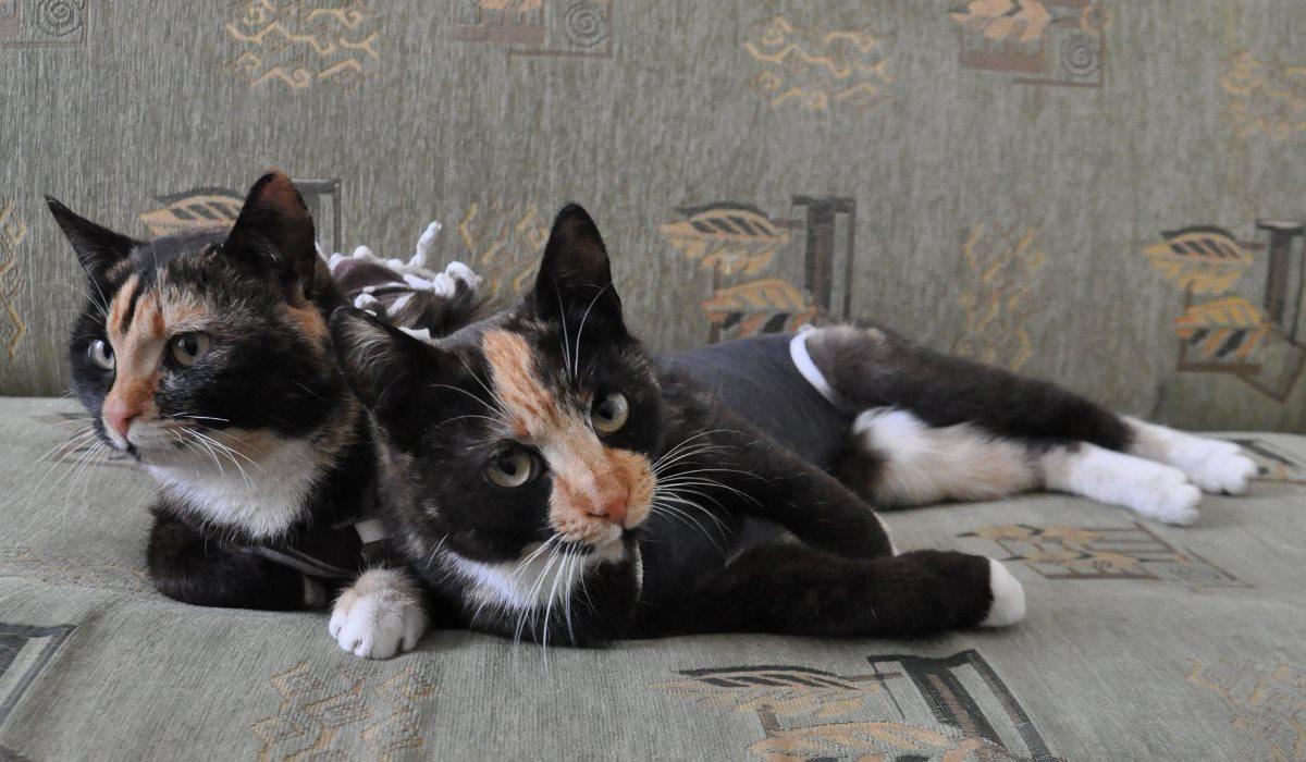 Близняшки ищут теплый и уютный дом