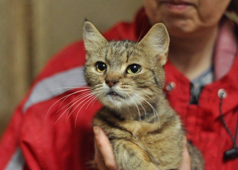 Тайша уже не молодая кошечка, но она тоже хочет найти настоящего друга