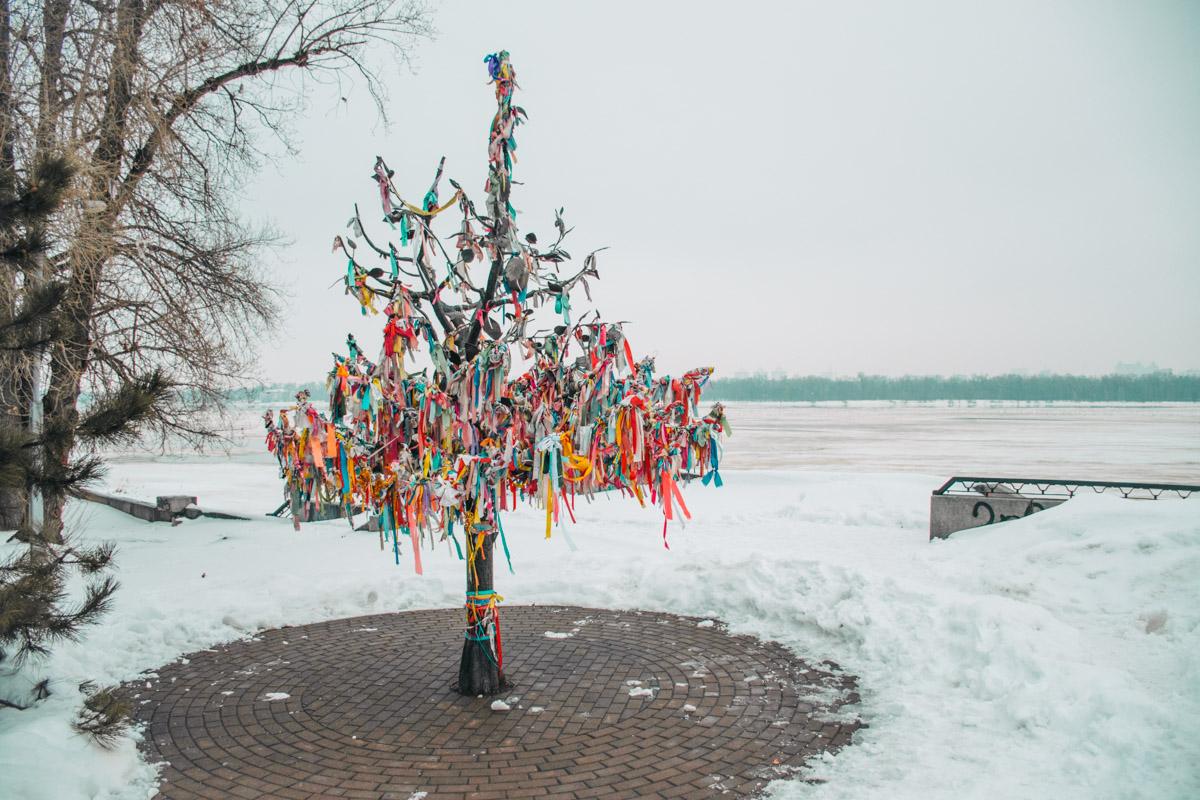 Дерево счастья в Наводницком парке Киева