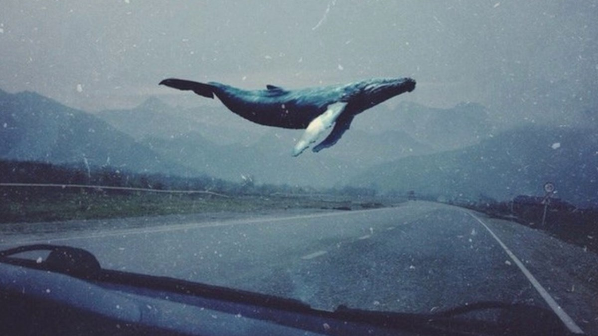 """В Одесской области мальчик повесился из-за игры """"Синий кит"""""""
