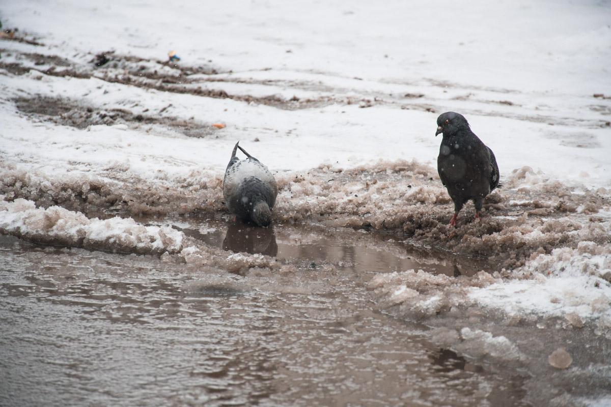 Хоть голубям есть толк от огромной лужи
