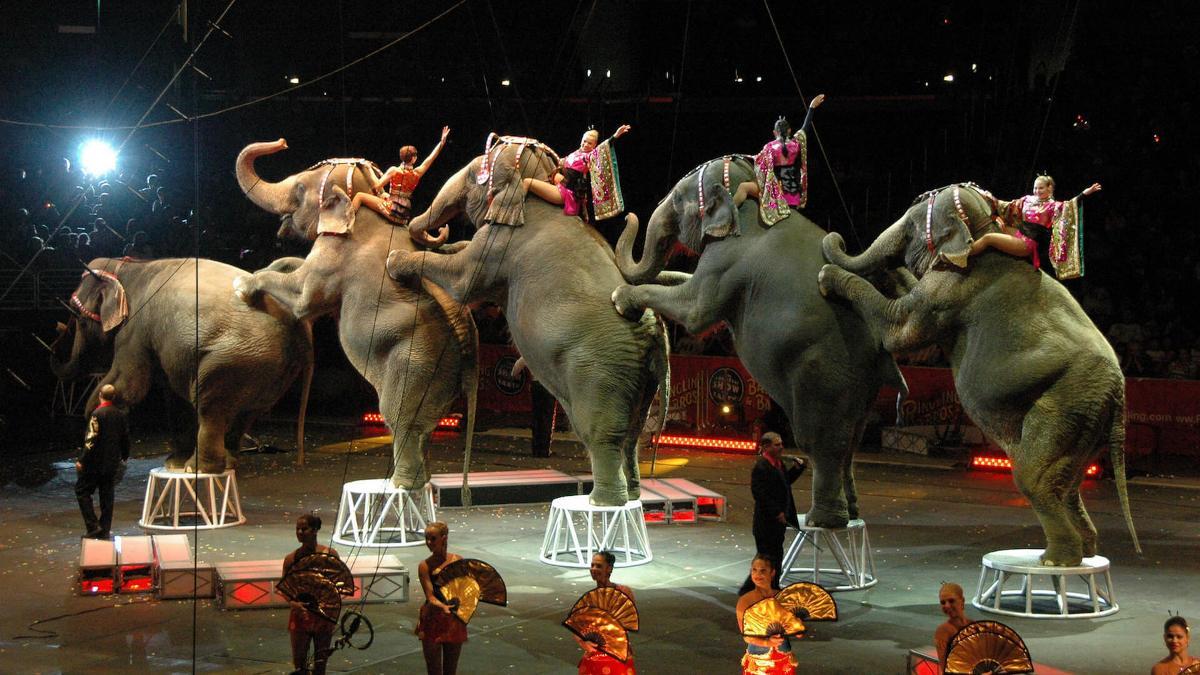 """Цирковое представление """"Слон и полосатый рейс"""" удивит вас"""