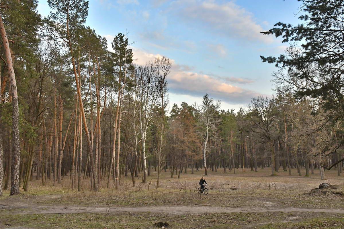 Скоро в парке появятся новые газоны