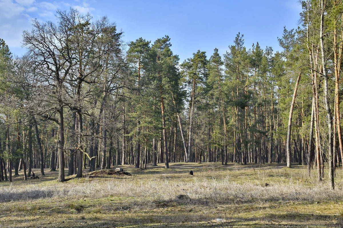 В теплые весенние деньки деревья хвастаются зеленой листвой