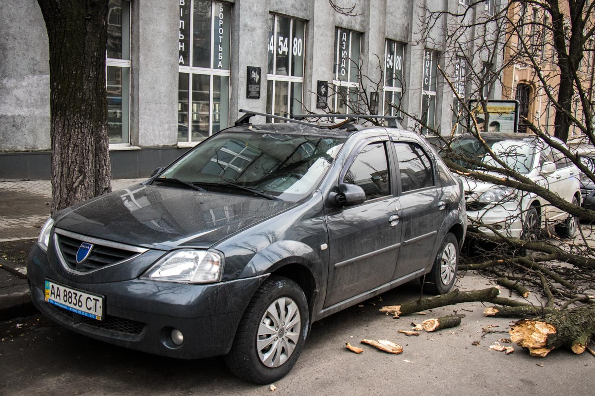 Ветка упала около 15:00 часов дня автомобили Dacia и Honda