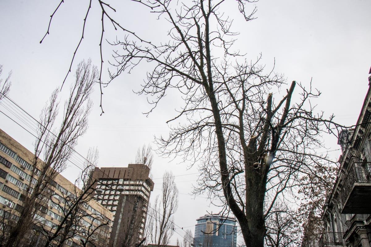Необрезанные деревья