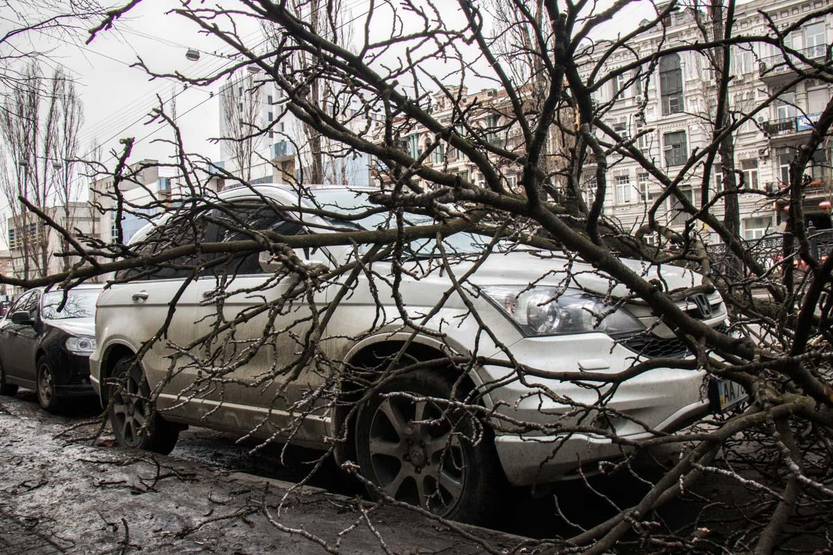 Дерево упало между двумя автомобилями и повредило оба
