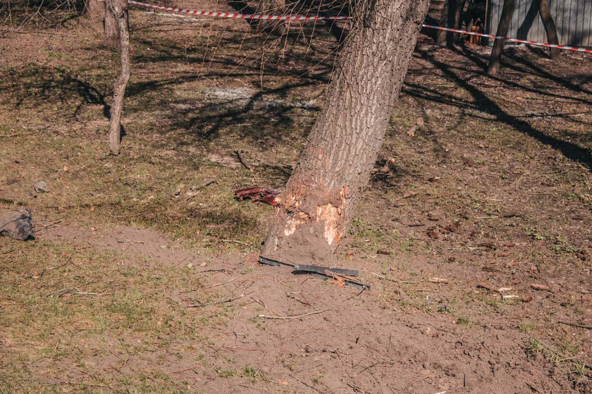 В аварии пострадали не только водитель и пассажир авто, а и дерево в парковой зоне