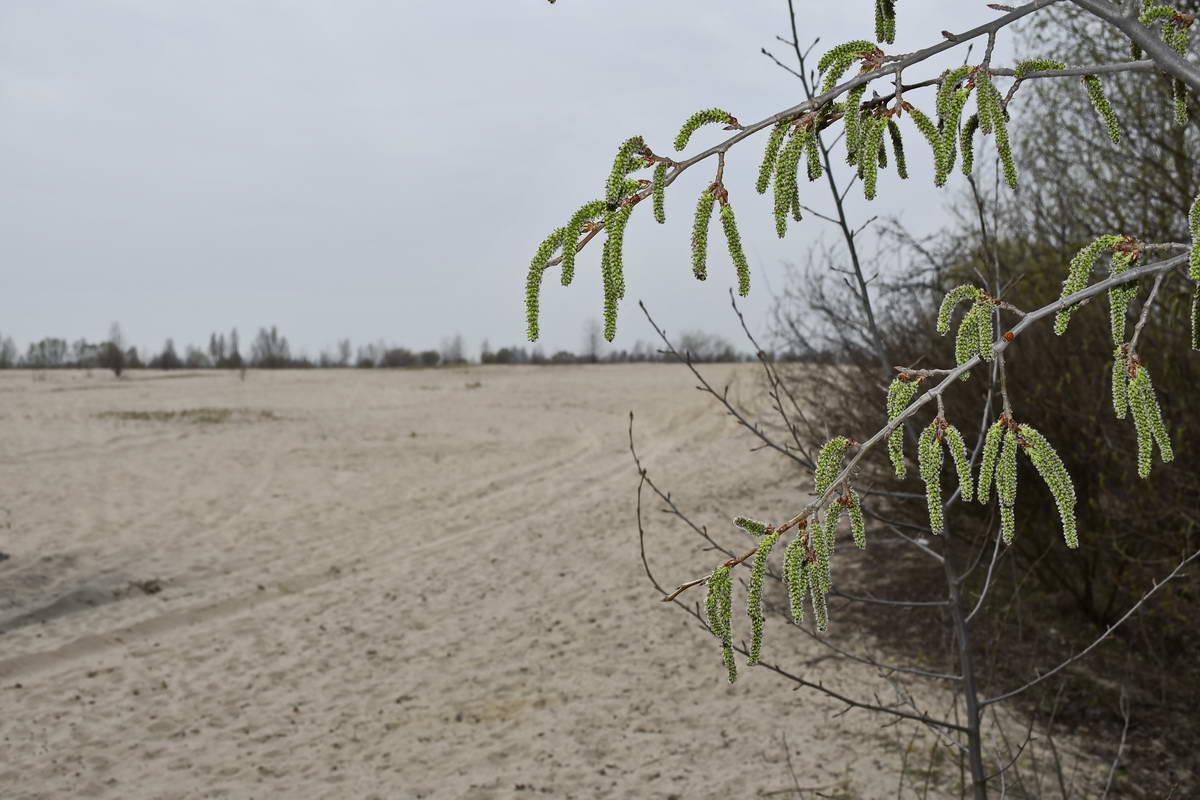 Лишь изредка можно встретить небольшие деревья или кусты