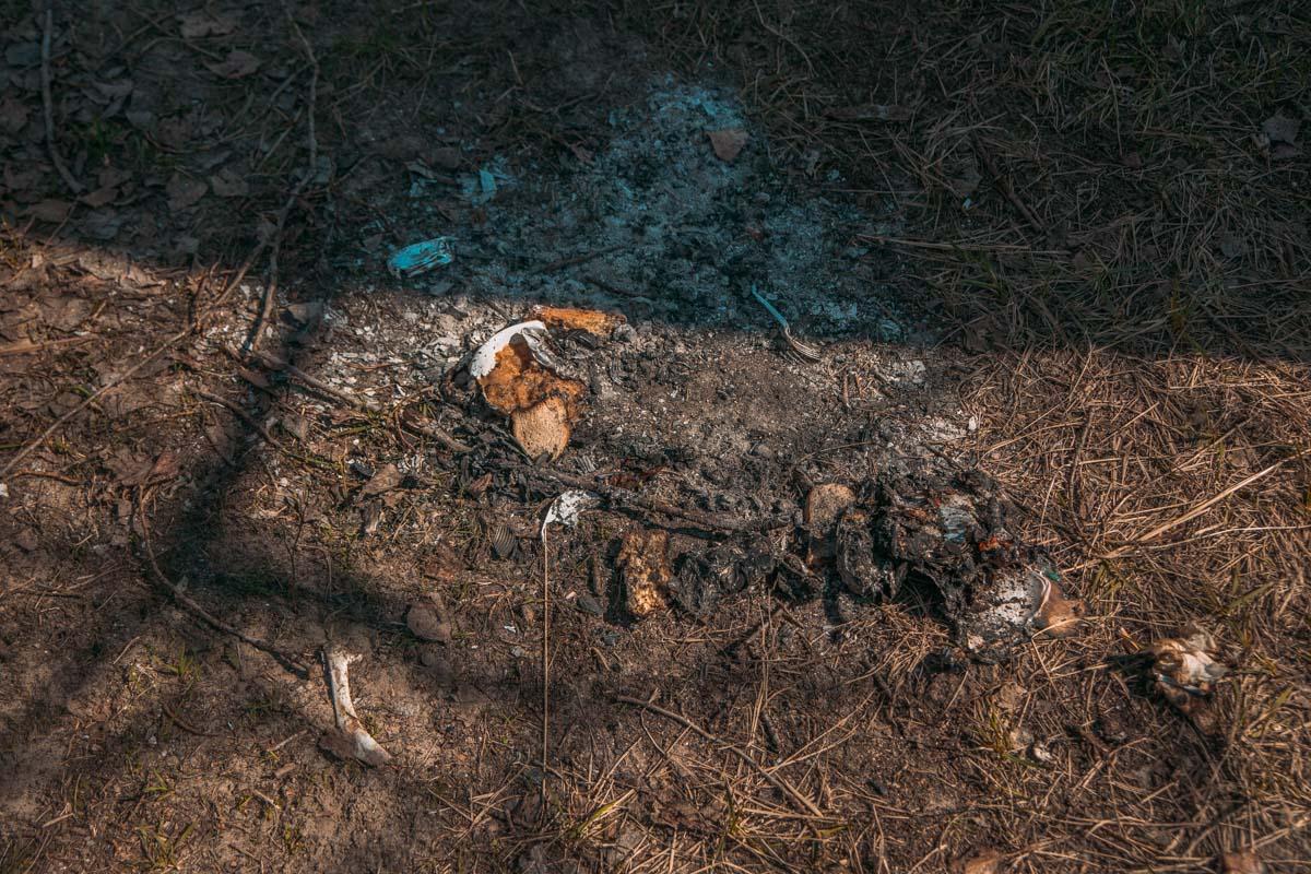 """Остатки """"пиршества"""" можно отдать бездомным собачкам, а не оставлять на лужайках"""