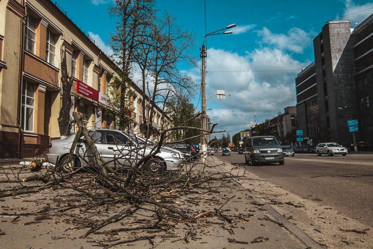 Гидрометцентр предупреждал о сильном ветре