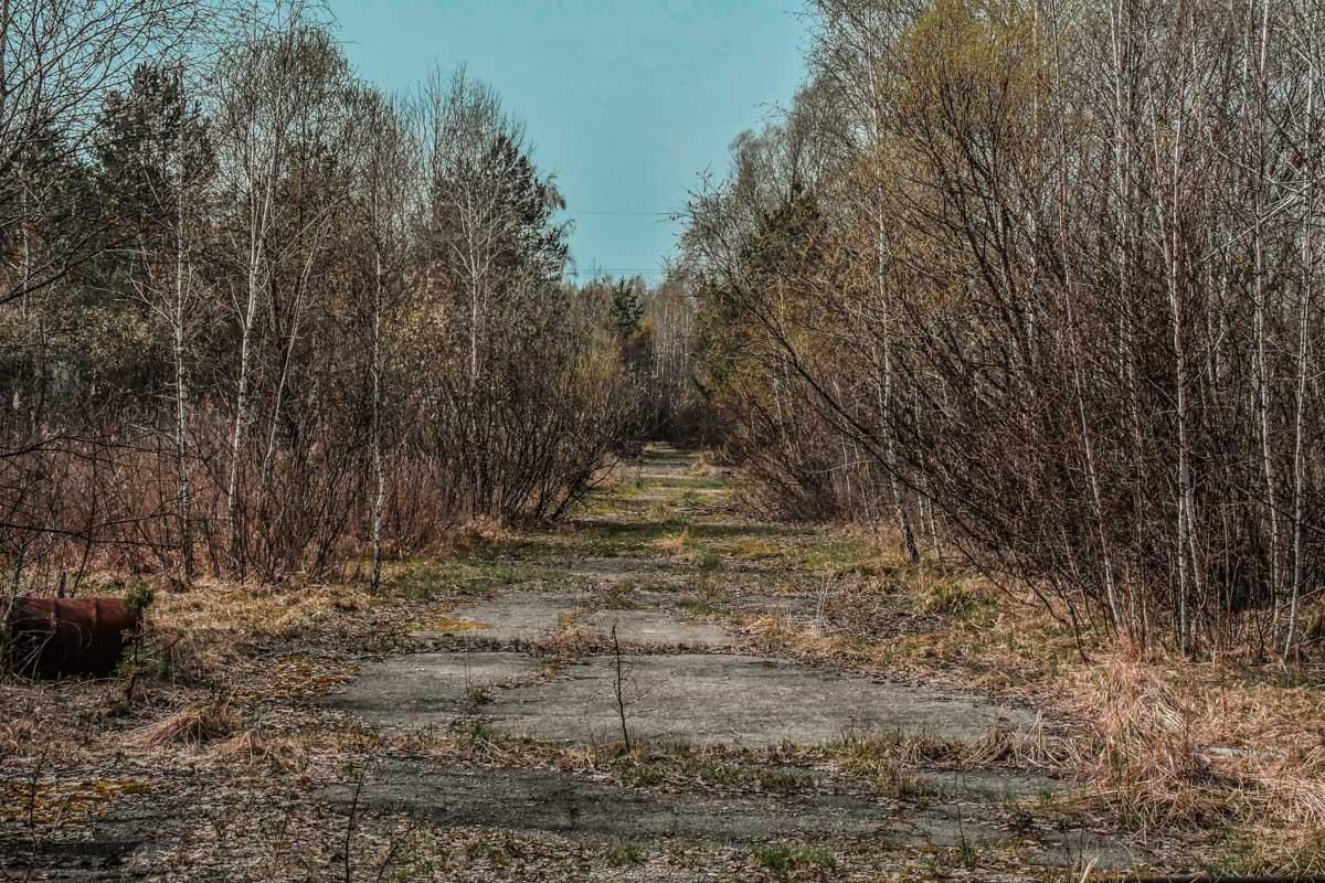 Дорога к пункту санитарной обработки