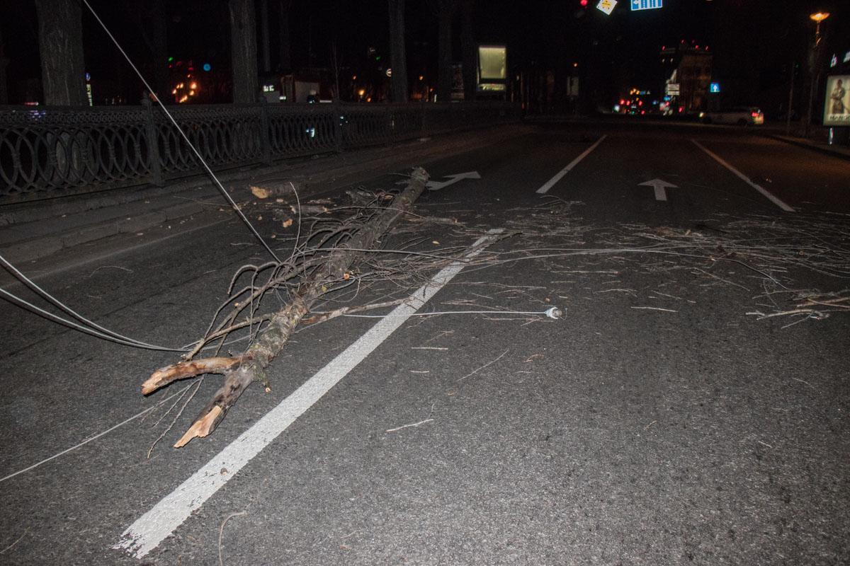 На бульваре Шевченко на проезжую часть упало дерево