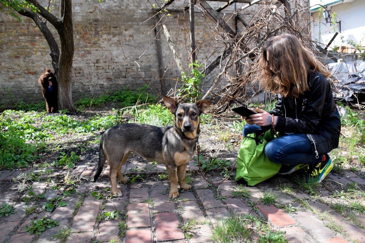 Собачка Адель танцевала со своей хозяйкой