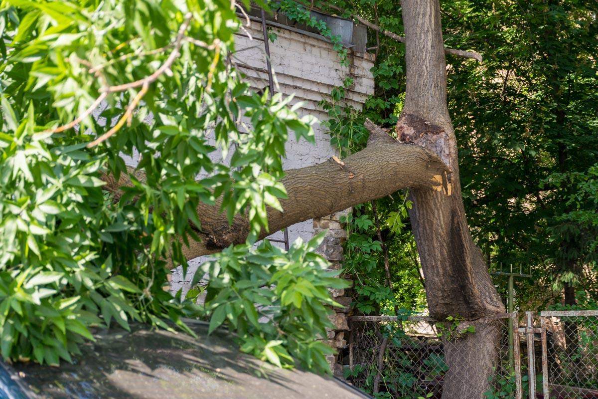 Дерево прогнило и рухнуло на автомобили