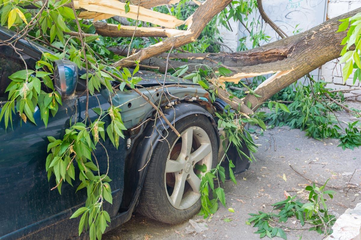 Парковать машину возле стройки или деревьев не желательно