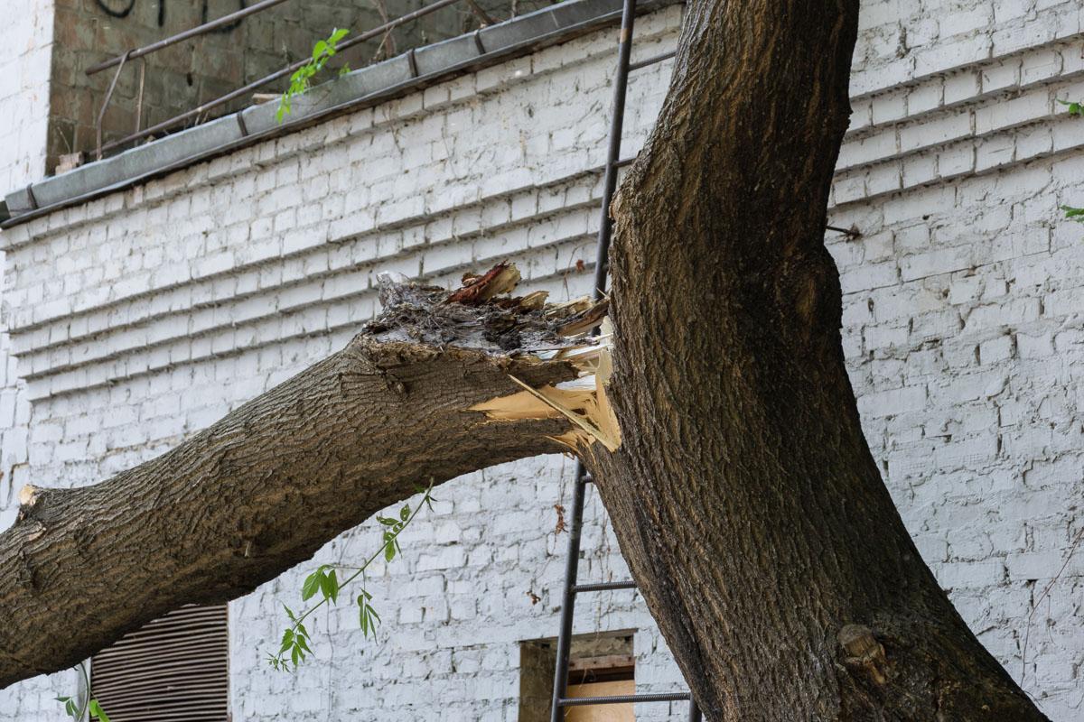Старое дерево рухнуло по адресуулица Хоревая, 31а