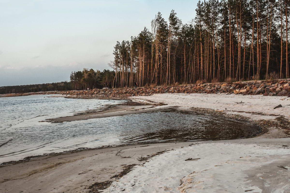 Рядом с Киевским морем хвойные леса