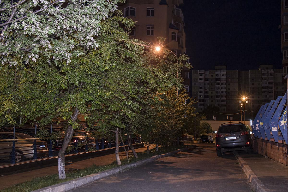 Уютные дворы Академгородка