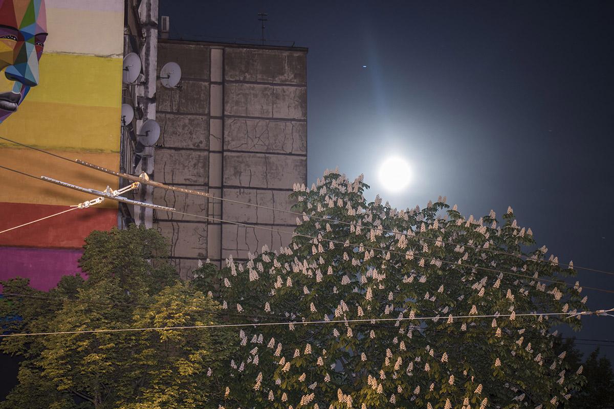 Луна освещает цветущие каштаны и окутанные тьмой дома