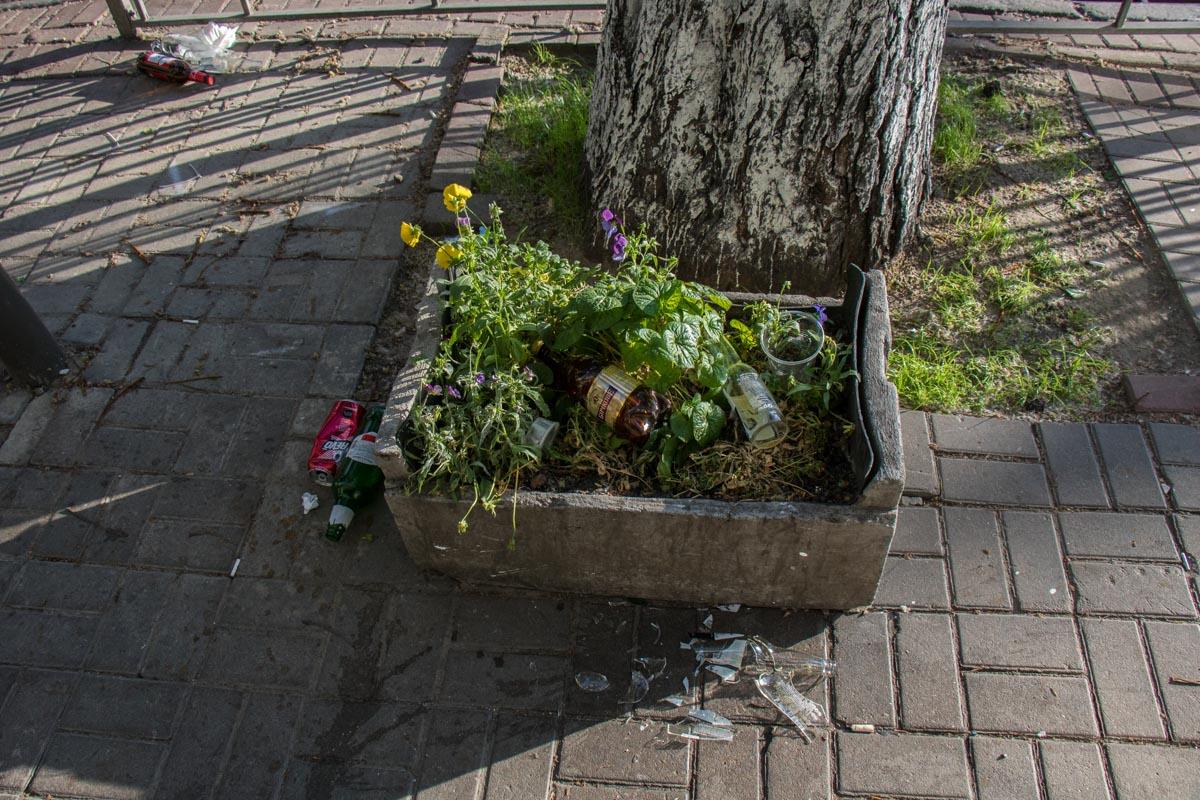 А вот так выглядят киевские клумбы